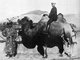 Central Asia: Sven Hedin (1865-1952), the Swedish explorer of Central Asia, sits astride a Bactrian camel, c. 1900