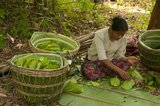 The Betel (<i>Piper betle</i>) is the leaf of a vine belonging to the Piperaceae family, which includes pepper and Kava. It is valued both as a mild stimulant and for its medicinal properties.<br/><br/>  Betel leaf is mostly consumed in Asia, and elsewhere in the world by some Asian emigrants, as betel quid or paan, with or without tobacco, in an addictive psycho-stimulating and euphoria-inducing formulation with adverse health effects.<br/><br/>  Chewing areca nut is an increasingly rare custom in the modern world. Yet once, not so long ago, areca nut – taken with the leaf of the betel tree and lime paste – was widely consumed throughout South and Southeast Asia by people of all social classes, and was considered an essential part of daily life.